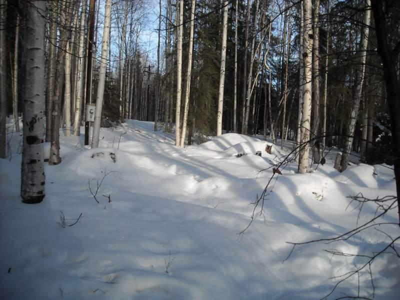 AK-Snow-2-26-14-1