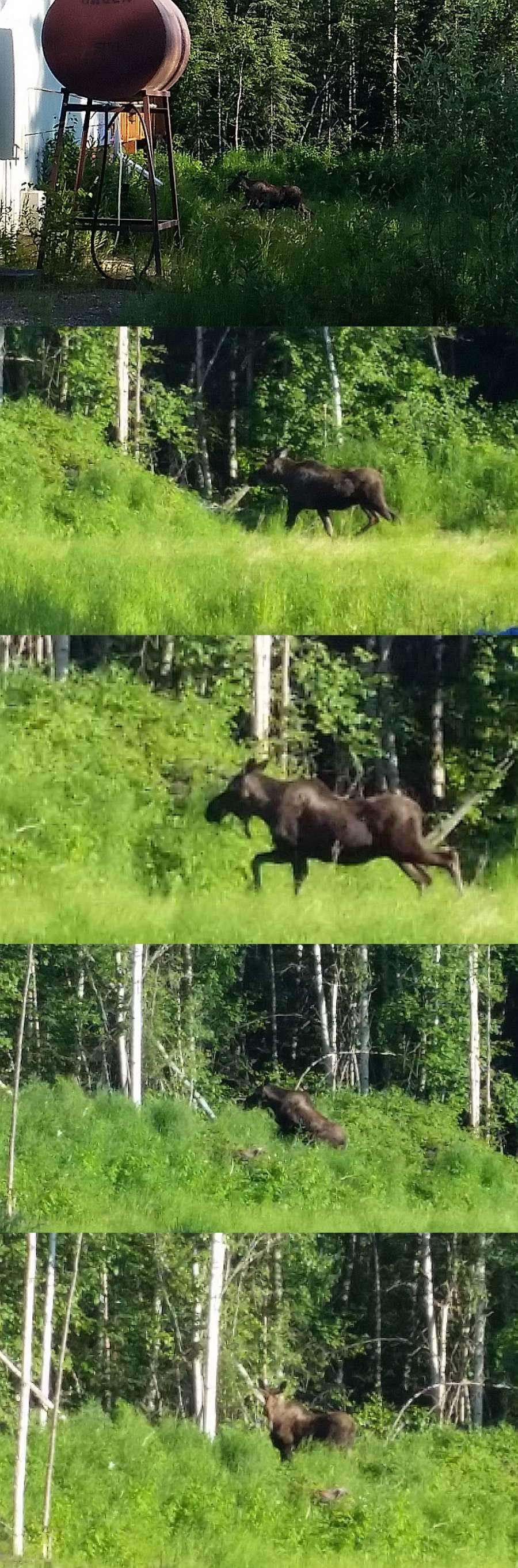 2015-06-15-Moose